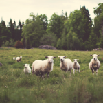 Finding Your Flock - Paleo AIP and Life After Teaching