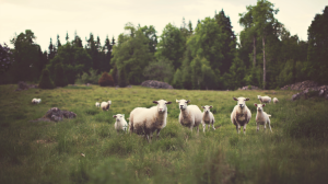 Finding Your Flock: Paleo AIP & Life After Teaching